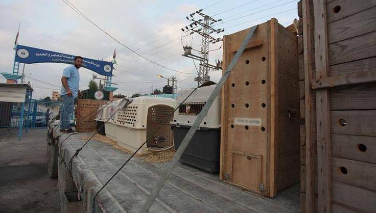 Petinggi Sayap Militer Hamas Dibunuh Penjajah Israel Antisipasi Balasan dari Gaza  SALAM-ONLINE: Gerakan Hamas telah menutup perlintasan Erez antara Jalur Gaza yang diblokade dengan wilayah yang dijajah Israel Ahad (26/3) menyusul pembunuhan misterius salah satu pemimpin gerakan tersebut.  Juru bicara Kementerian Dalam Negeri Iyad al-Bozum mengatakan itu adalah bagian dari langkah-langkah keamanan yang diberlakukan setelah Mazen Fuqaha pemimpin sayap militer Hamas ditembak mati oleh orang…
