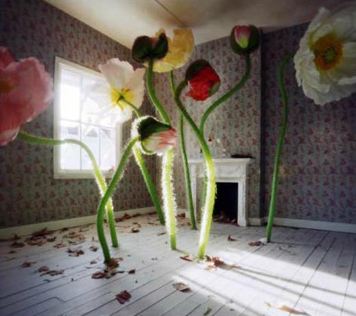Halloween Bedroom Decor London Themed Bedroom Accessories Bedroom Interior Concept Bedroom Design Latest: Best 25+ Wonderland Ideas On Pinterest