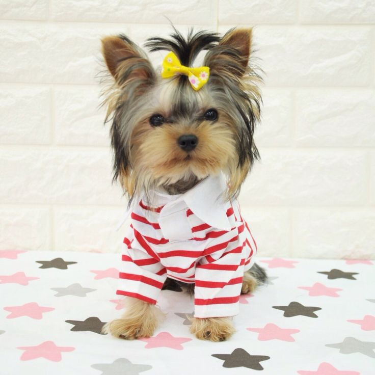Pet T-Shirt Yorkshire Dog Clothes Striped Sports Spring Wear Clothes for Dogs Dog Hoodies for Sale xiaomi