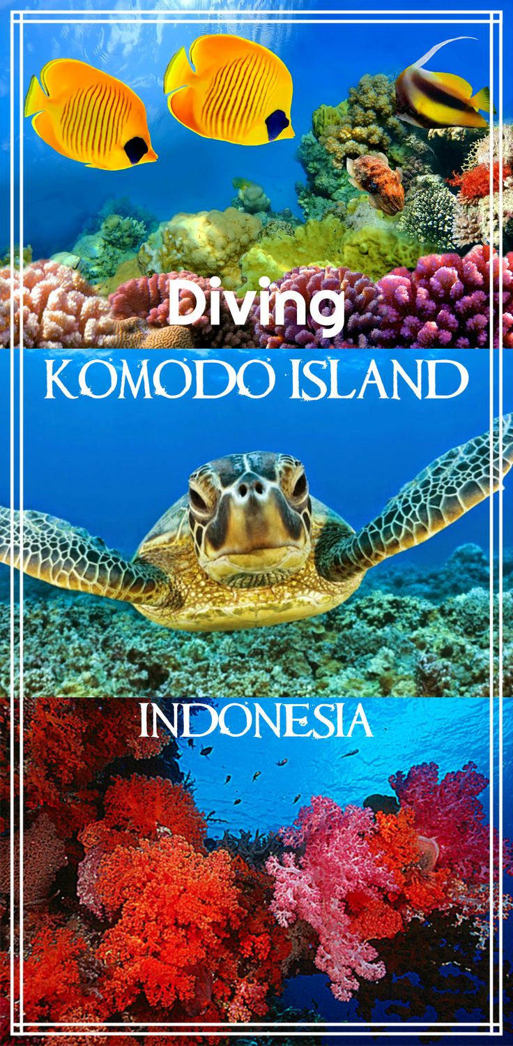 Diving Komodo island, Indonesia. Best dive sites, choosing a dive operator, best season to dive Komodo, what to see, visibility, prices, mantas, sharks, turtels, coral reef. Best diving in the world.