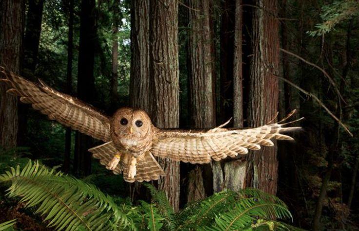 owl 5411
