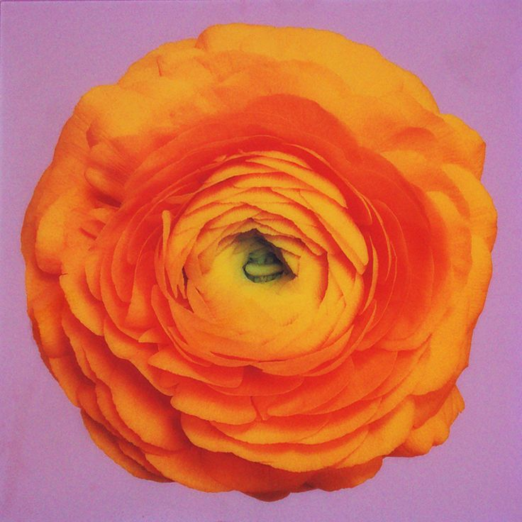 "Ron Agam ""Ranunculus on Lavender"" Ink & resin on canvas mounted on ..."