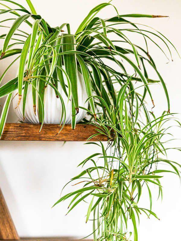 These Are The Most Popular Houseplants In America Plants