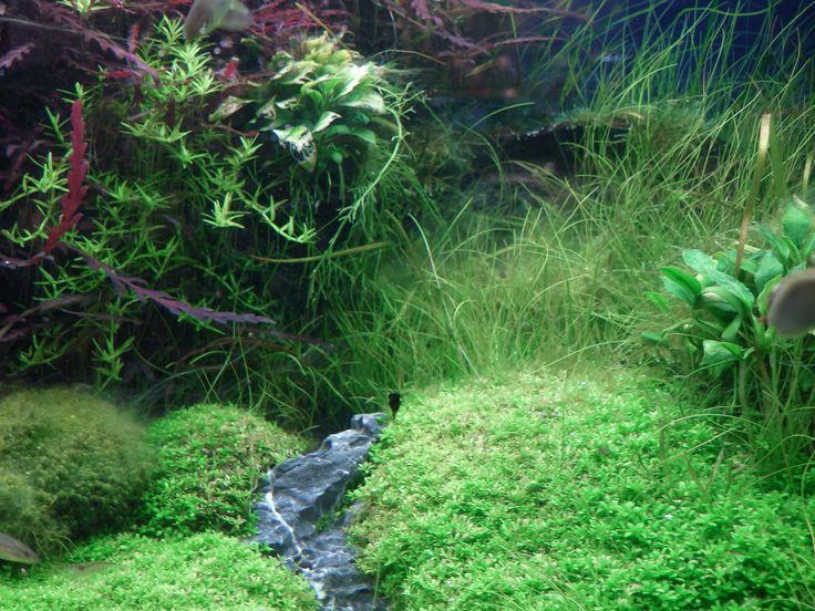 Amazing Aquarium with Plants