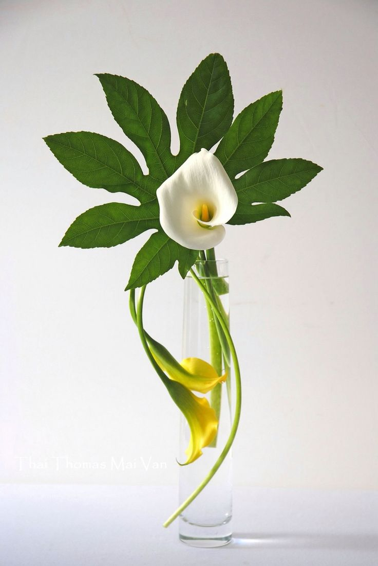 These white and yellow calla lilies can be purchased at couturehomeaz.com