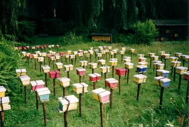 Kirchhain mating hives. It looks like a flower garden. - Bee keeping
