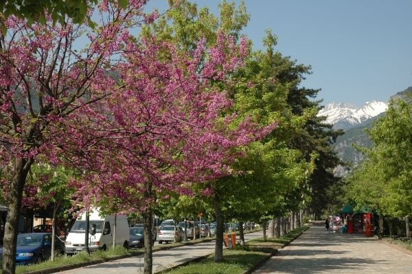 Spring in Litochoro, Pieria, Mount Olympus, Greece. Peter Krog