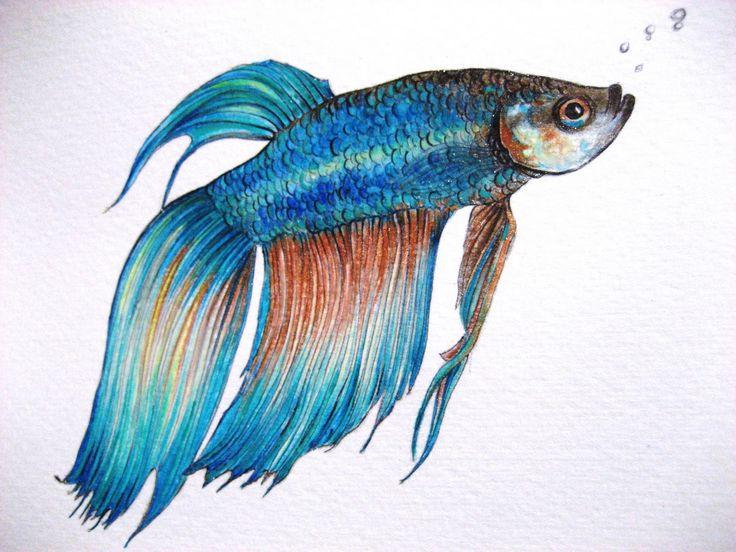 315 best images about ♥ Betta Fish ♥ on Pinterest | Betta ... Betta Fish Drawings