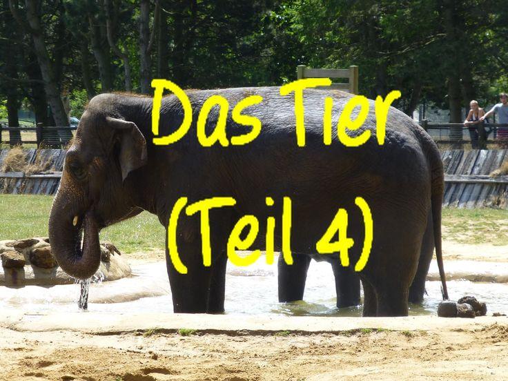 Learn German: Das Tier (Teil 4)