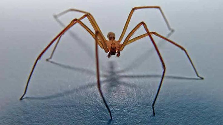 Brown recluse spider infestation shuts down post office