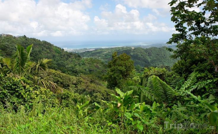 Deštný prales El Yunque (Portoriko)