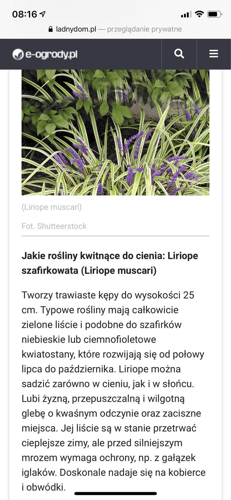 Pin By Anna Gorgon On Cieniolubne Plants