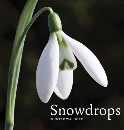 Snowdrops: Amazon.co.uk: Gunter Waldorf: 9780711233850: Books