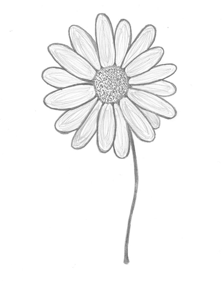 Gerbera Daisy Line Drawing 30 Day Drawing Challen...