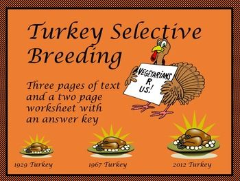 Turkey selective breeding reading passage and a  worksheet with an answer key is included. The texts compares turkey selective breeding and genetically modified corn. Great lesson for the Thanksgiving holiday. Can be a homework or class assignment. Works well as a sub plan lesson.