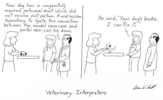 What is a Veterinary Technician? - YouTube   Cartoon Vet Tech