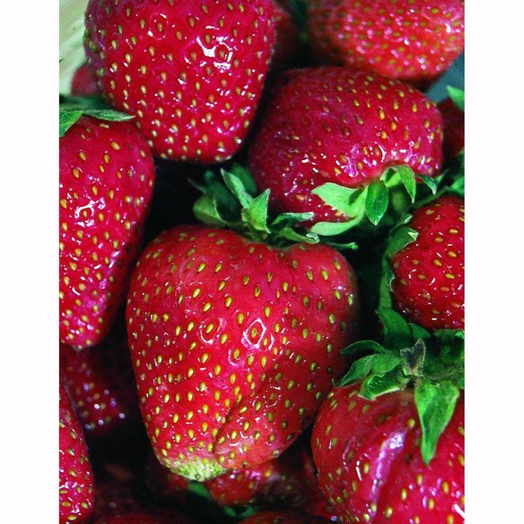 home depot strawberry seeds