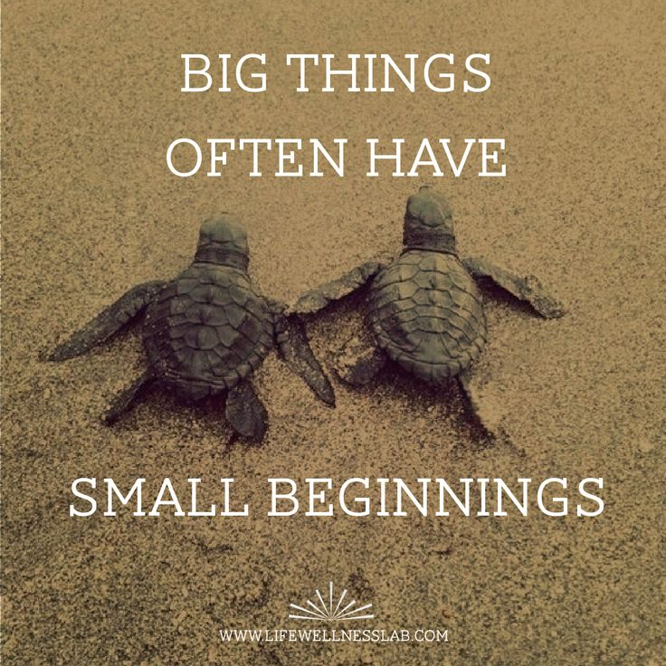 Small Beginnings! Big Things! Motivation, Turtles, Quotes
