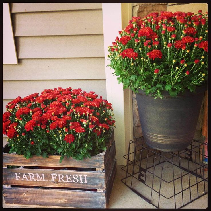 Rustic Metal Bucket and Wood Crate Planters   ♥♥