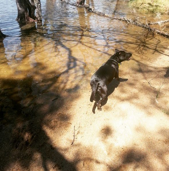 River dog - day one: water #WPNliveit #water