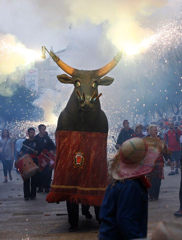 El Bou Festes de Santa Tecla Tarragona Catalonia