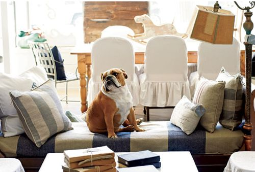 One of my favorite dogs, Bulldogs!<3: Animals, Design Doggies, French Bulldogs, Favorite Places, English Bulldogs, Pet, Beautiful Dogs, Bull Dogs