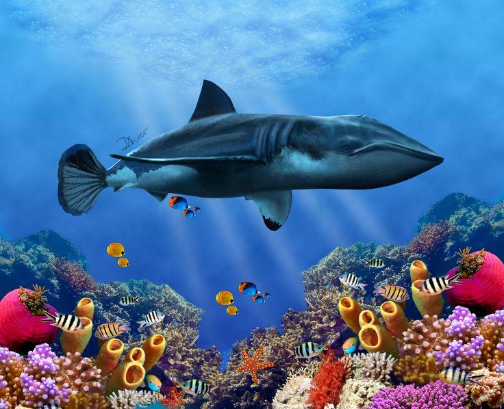 Manipulación de imagen: El reto era hacer una mutación animal de tres animales diferentes se puede obsevar la cola de un pez mandarin, el cuerpo de un tiburón blanco y la cabeza de una ballena azul. #animal #mutation #wales #whitebigshark #photoshop  #adobephotoshop