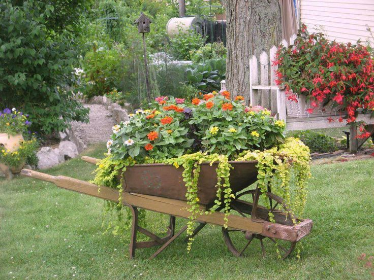 Wheel barrow planters wheelbarrows pinterest for Amenagement jardin 974
