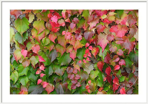 Jenny Rainbow Fine Art Photography Framed Print featuring the photograph Colors Of Autumn 6 by Jenny Rainbow
