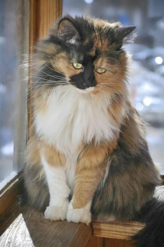 Brilliant Beautiful Cat Names Male Pretty Cats Beautiful