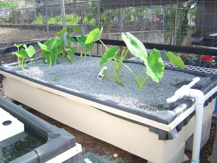 aquaponics is a type of gardening program that brings together agricultural and aquatic lifestyle description