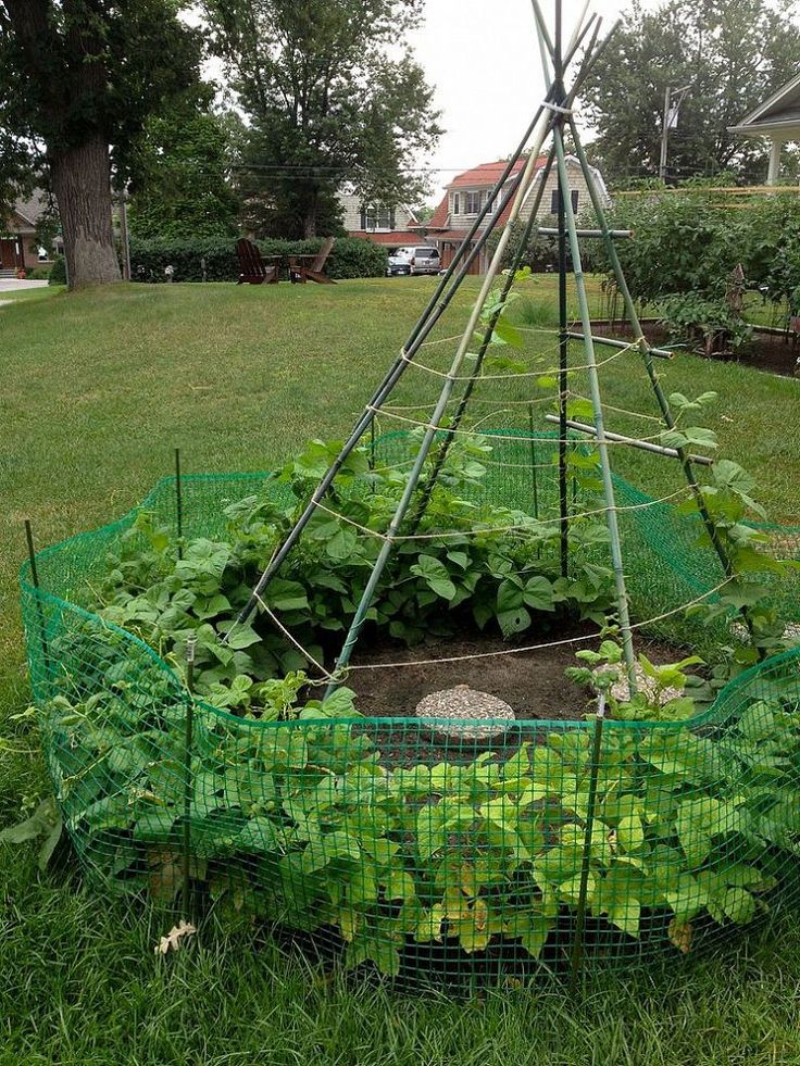 Hometalk :: Does Straw Bale Gardening Really Work?