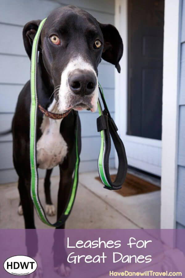Leashes For Traveling With Great Danes Dog Beach Dog Gadgets