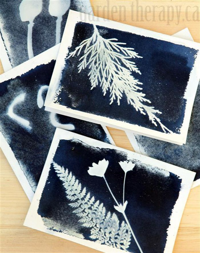Black and White Nature Prints