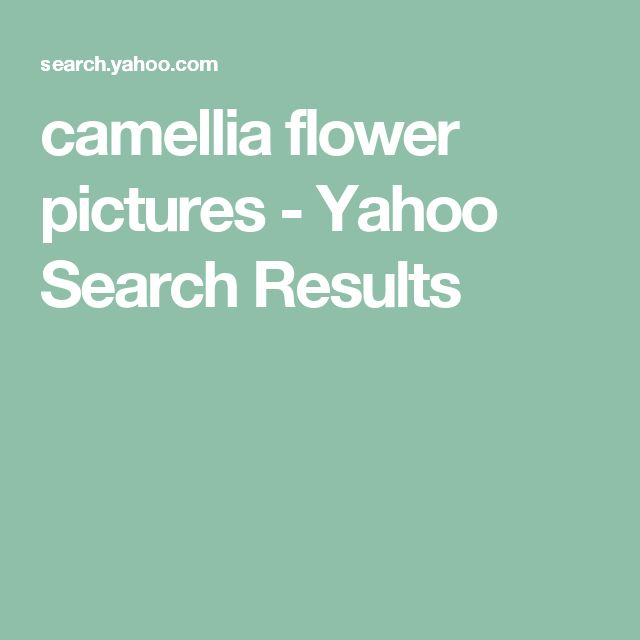 camellia flower pictures - Yahoo Search Results
