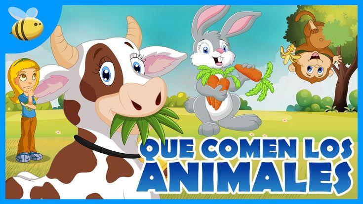 ¿Qué comen los animales Herbívoros, Carnívoros, Omnívoros?   Videos Educ...