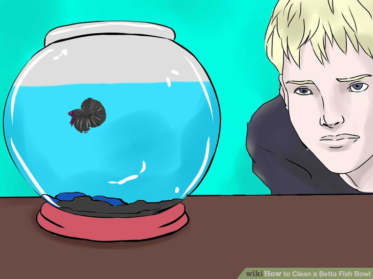how to clean out a betta fish tank
