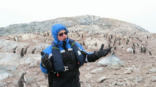 Penguins run for the hills after opera singer Nick Allen belts an improptu song to the colony. CBSN's Elaine Quijano has more.