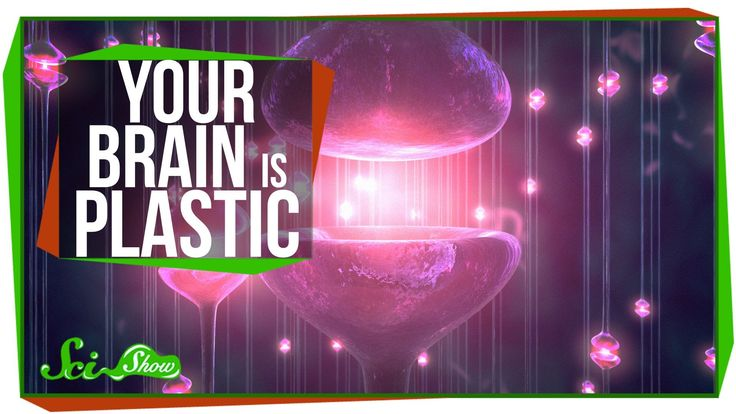 Your Brain is Plastic:  Hank explains the gift that your brain gives you every day: the gift of neural plasticity -- the ways in which your brain actually changes at the cellular level as you learn.