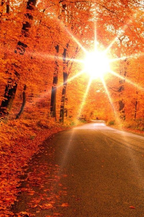 Oh fall :): Lights, Autumn Roads, Orange, Fall Leaves, Autumn Leaves, Color, Fall Trees, Natural, Sun
