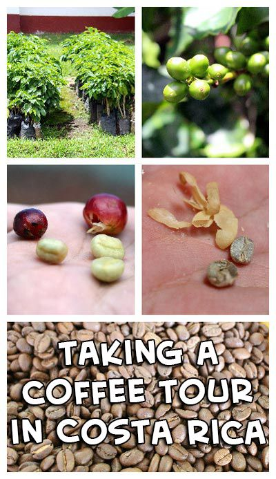 Take a coffee tour to learn why Costa Rica's coffee is so good! http://mytanfeet.com/activities/doka-estate-coffee-tour-costa-rica/