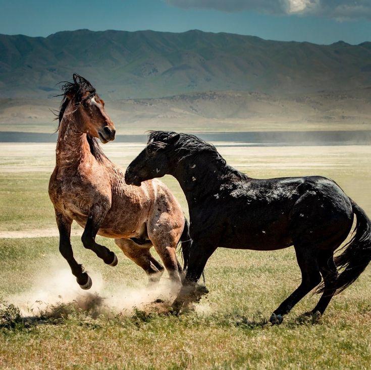 картинки лошади мустанг цифры