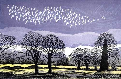 White Flock Rising linocut 19 x 28 cm £150