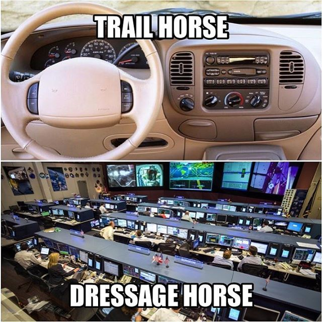 "Lol! Although my trail horse can be a whole other level of crazy compared to my h/j who dabbles in dressage. But yeah he has a lot more of the ""fancy buttons""."