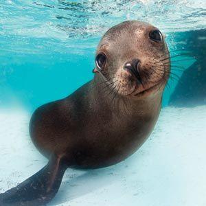 Best 25 New England Aquarium Ideas Only On Pinterest