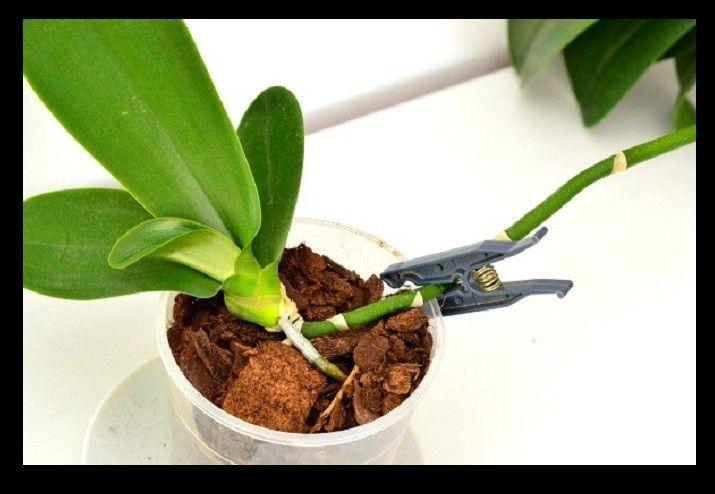 Megmutatjuk, hogyan ültesd át az orchidea palántát - MindenegybenBlog