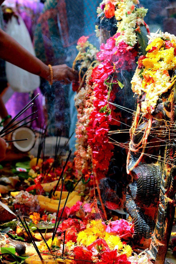 nag panchami snake festival.