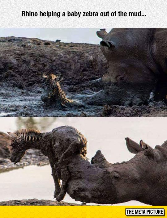 This Rhino Is Awesome