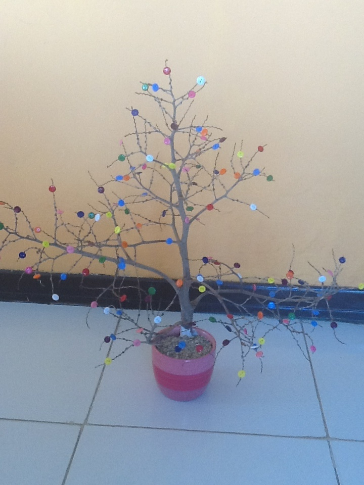 Tropical tree with buttons