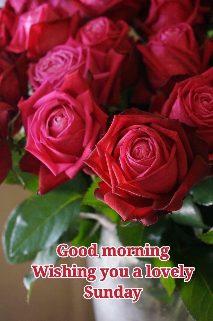 Good Morning Gooe Day Good Morning Flowers Good Morning Flowers Rose Good Morning Beautiful Flowers